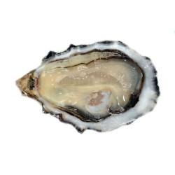 Normandes Pleine Mer x6